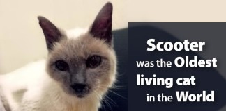 Oldest Living Cat Died at 30